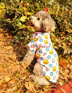 $14.36 Designer Clothes for Dogs Shirt