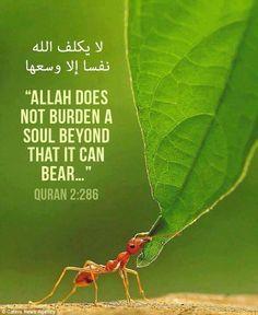 [Qur'an 2:286]  #Islam