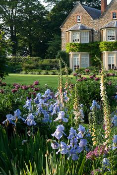 The Old Rectory, Haselbech, Northamptonshire (iris, foxgloves, poppies) - Clive Nichols