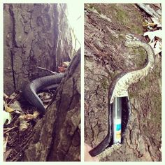 Is that a snake?  Nope, it's a #geocache!  (pinned from websta to Creative Geocache Containers - pinterest.com/islandbuttons/creative-geocache-containers/)