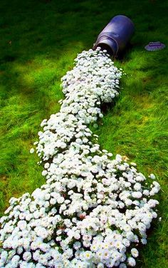 A trail of flowers- really cool idea.