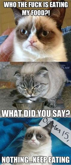 Top 49 Most Funniest Grumpy Cat QuotesJust Laughs Fun and Humor Page 4