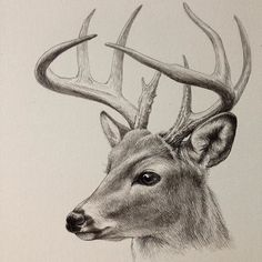 """Daily drawing """"Deer"""" Done. I feel a quiet appearance Pen and ink, Copic… – Animal Drawing Realistic Pencil Drawings, Pencil Art Drawings, Art Drawings Sketches, Charcoal Drawings, Animal Sketches, Animal Drawings, Reindeer Drawing, Deer Sketch, Deer Illustration"""