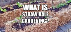 What is Straw Bale Gardening? Maybe we should try this with our bale out front... hmmm...