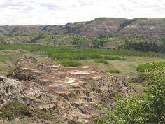 Dry Island Buffalo Jump Provincial Park Alberta | Lush Green Forest