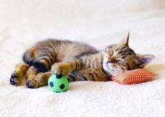 Si te gusta ver saltar a tu gato de felicidad, te dejamos algunos consejos para hacer los mejores juguetes para gatos, de una forma sencilla y barata.
