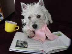 a cup of tea, a warm scarf, a book, and a westie... what more does a girl need?!