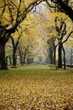 Next visit to the big apple I will def spend a day at Central Park NYC