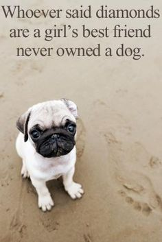 True--but let's be honest, really, they never owned a PUG.I would take a PUG over diamonds ANY DAY! Pug Love, I Love Dogs, Raza Pug, Amor Pug, Funny Animals, Cute Animals, Cockerspaniel, Border Terrier, Pug Puppies