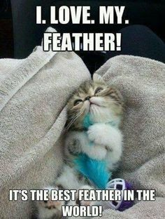 Cat loves her feather