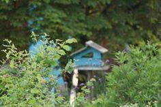 Absolut Oiseaux · Photos de l'établissement