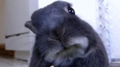 This bunny is trying to understand why you need to hit the snooze button 12 times: | 16 Animals Who Want You To Wake Up Already