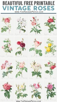 You& not find a fairer rose than those depicted in our 16 beautiful free printable vintage rose illustrations! Free Printable Art, Printable Vintage, Free Printables, Vintage Labels, Vintage Ephemera, Decoupage Printables, Floral Printables, Vintage Botanical Prints, Vintage Art Prints