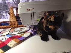 ❤ =^..^= ❤    Michelle's Quilts & Stuff: Feline Friday
