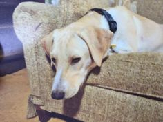 Chester Veterinary Clinic Like This Page · June 22 · Edited  ·   Update: Unfortunately this dog was found hit by a car. Thank you to everyone spreading the word. MISSING-This is River, he's missing from Pleasant Street in Chester. He's about 80 lbs and 3 years old. Please message us if you find him!