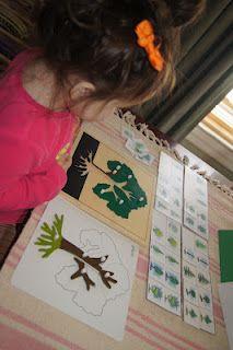 Botany 1 - Montessori Botany Cabinet Work from Making Montessori Ours