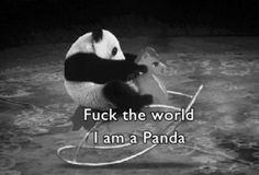 Fuck the world, I'm a panda.