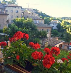 The view from our restaurant this evening in Urbino, Italy!