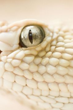 What?  Is this a white lizard?  Or snake?  BEAUTIFULLY textured scales, and reflective eye.  Wow!