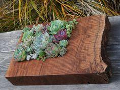 salvaged wood slab succulent planter
