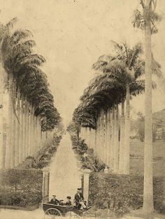 Grande alameda que dava acesso ao Paço Isabel, abaixo vemos a Princesa Isabel e o Conde D'Eu