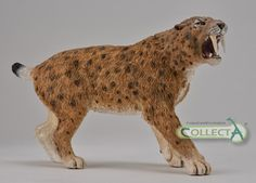 Nicely crafted Sabre-Tooth Cat model.