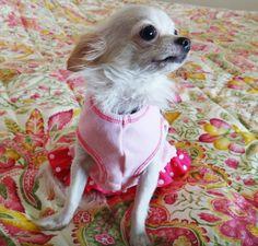 Minnie #PureJoy #Dogs