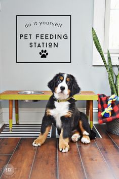 This DIY pet feeding station is so simple to build and can be customized to fit in with any style home decor. Our Bernese Mountain Dogs are loving their new station! Diy Furniture Projects, Diy Projects, Dog Furniture, Woodworking Projects, Pet Dogs, Dog Cat, Diy Pet, Dog Feeding Station, Mountain Dogs