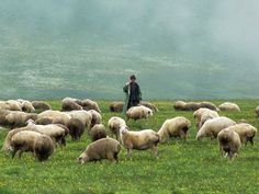 the lord is my shepherd on pinterest psalm 23 sheep and