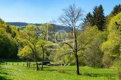 Der Frühling ist im Tal angekommen -  Frühling, Tal, Wiese, Bäume, Wald, Lichtung, Naturfotografie  - Gerade gefunden auf http://ronni-shop.fineartprint.de
