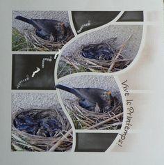 Auteur: Marie-Laure Bouvier Univers: Scrap Niveau: Expert Theme:  Nature Animaux Gabarit:  Duo Madrid-Sydney