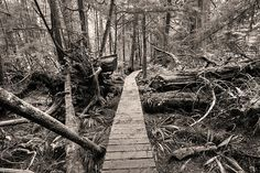 Pacific Rim National Park- I decided to hike the AT while hiking here in Pacific Rim, Pacific Northwest, I Want To Travel, Canada Travel, British Columbia, Simply Beautiful, National Geographic, Bridges, West Coast