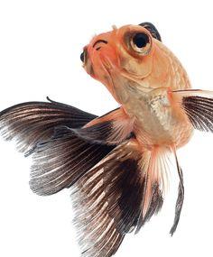 Фантастически красивые рыбки / Visarute Angkatavanich