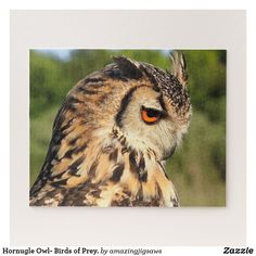 Hornugle Owl- Birds of Prey. Jigsaw Puzzle