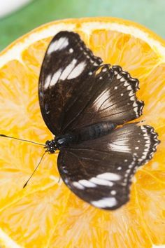 How to make a DIY butterfly feeder