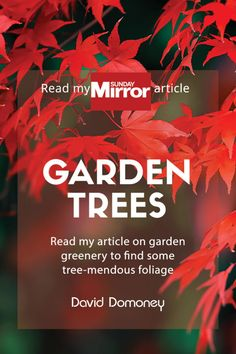 The best climbing plants for shade - David Domoney Fall Plants, Shade Plants, Garden Trees, Trees To Plant, Climbers For Shade, Blueberry Tree, Plants To Attract Bees, Rock Garden Design, Herbaceous Border