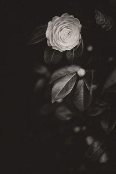 by kureyuzu, via Flickr