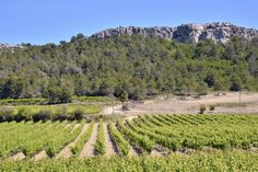 Le succès du vin bio a porté la France au 2e rang des producteurs mondiaux derrière l'Espagne, conduisant la filière à s'organiser pour défendre ses intérêts et préserver son âme.