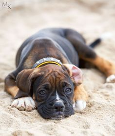 Boxer Dog Chained To An Abandoned Building Gets Rescued And Transformed By An Amazing Woman - The Pooch Online Boxer And Baby, Boxer Love, Boxer Puppies, Dogs And Puppies, Dogs 101, Doggies, Boxers, I Love Dogs, Cute Dogs