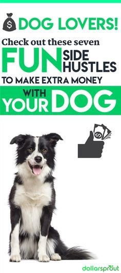 7 cute ways your pets can make you money money matters how to rh pinterest com