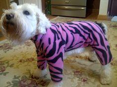 Cuddles shrunk Gunther's favorite pajamas. #SDWC
