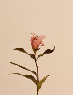 Schon Magazine / Rusted Petals on Behance