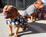 DIY DogCoats. Make your own dog coat, basic tutorial.