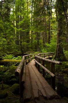 Forest Bridge, Oregon