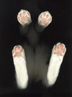 Scanner Cat...the paw pads look like little pink beans.