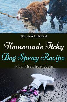 Itchy Dog Spray Apple Cider Vinegar Spray Video Tutorial