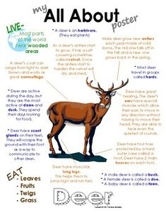 My All About Deer Book - (Woodland, Forest, North American Animals). Also available in a bundle pack with Squirrels, Bats, Skunk and Owls. Woodland Forest, Woodland Animals, Facts About Deer, Animal Facts For Kids, North American Animals, Thanksgiving Preschool, Can Dogs Eat, Deer Hunting, Hunting Tips