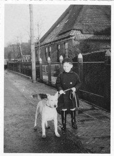 Bull Terrier 1918, colección C.H.