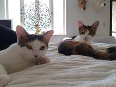 三毛猫姉妹