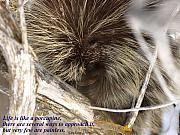 DeeLon Merritt - Life Is Like A Porcupine...